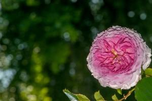 fleur3d