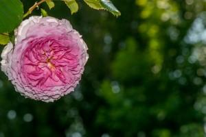 fleur3g